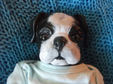 What once was a Pug, has now become a Boston Terrier