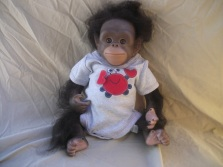 Factory painted and rooted Chaz Chimpanzee. Visit my etsy shop for pricing!